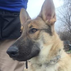 Dog Training Tampa